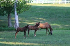 Stone Ridge Equine Reproduction Services