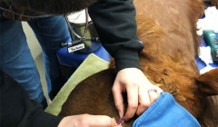 Equine Surgery Preperation, Evansville IN