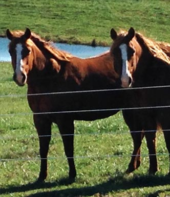 Stone Ridge Equine Services Veterinary clinic north side evansville