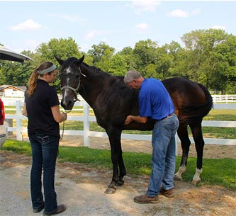 Dr. Stone and Vet Tech. Tia examine a horse in Evansville IN
